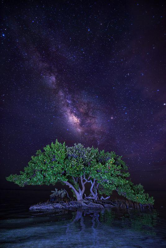 Anne S Beach Milky Way Islamorada Florida Keys Florida The Milky Way Rises Over A Group Of Mangroves In The Florida Keys Where The D Milky Way Scenery Photo