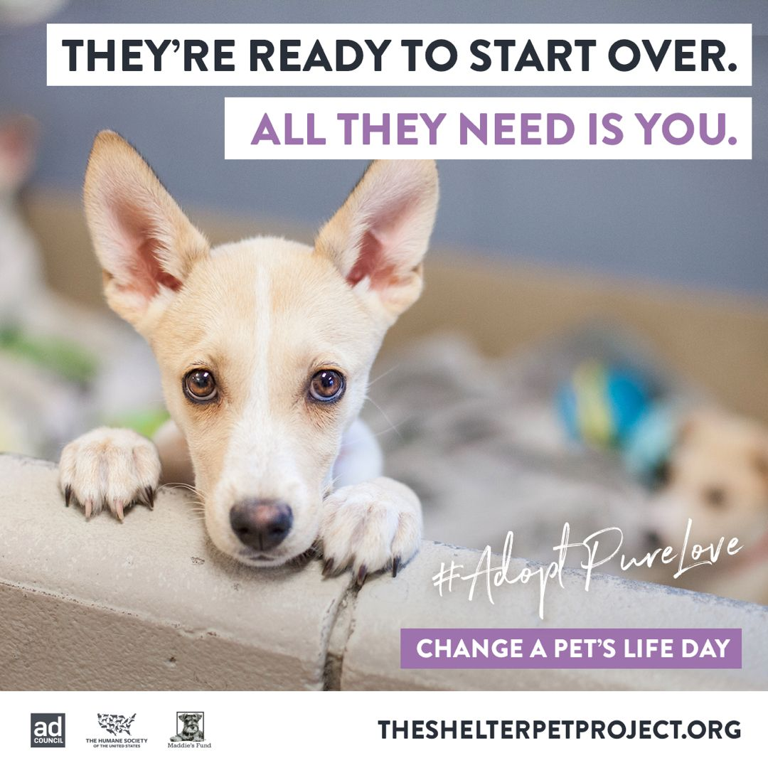You Have The Power Adoptpurelove In 2020 The Shelter Pet Project Pets Animal Projects