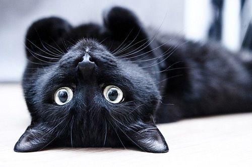 Картинки по запросу черный кот