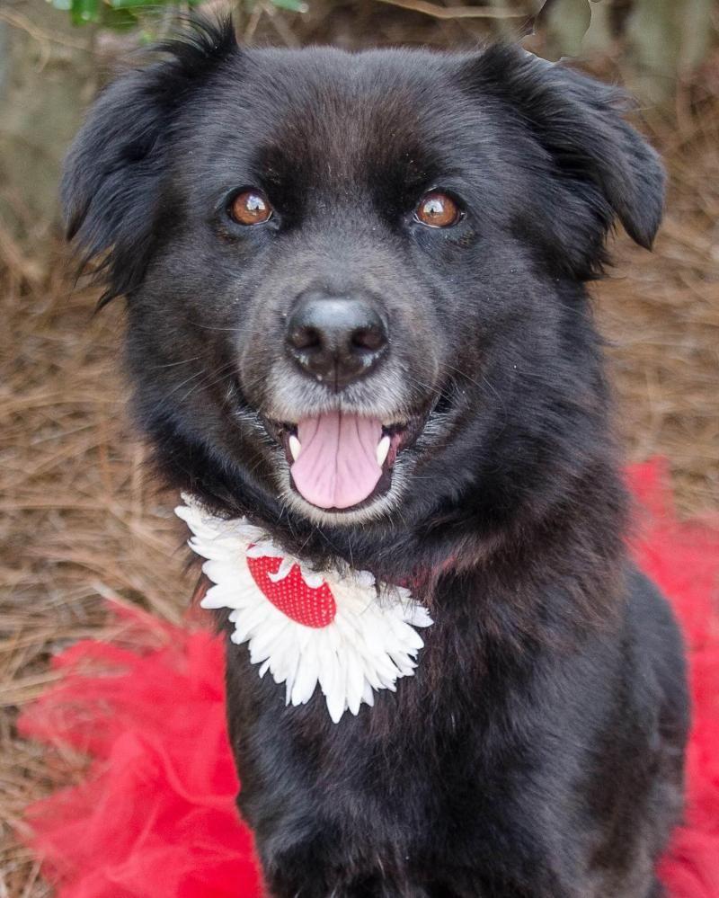 Labrador Retriever Puppies Charlotte Nc 2021