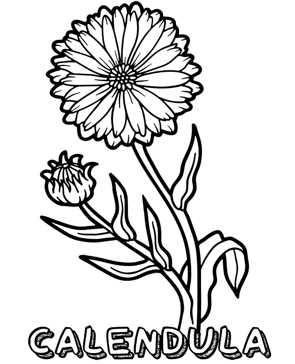 Calendula Coloring Page In 2020 Flower Coloring Pages Easy Coloring Pages Coloring Pages For Kids
