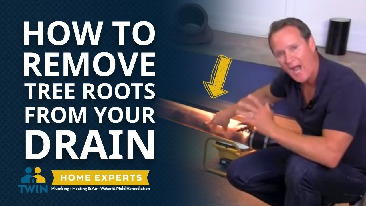 How to remove tree roots from your drain! Tree roots are a