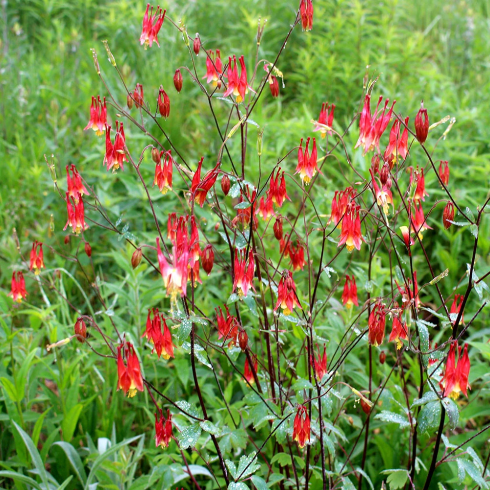 Pin On Cottage Garden