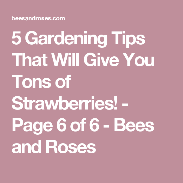 5 Gardening Tips That Will Give You Tons of Strawberries! - Page 6 of 6 - Bees and Roses