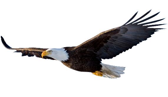 Do Eagles Cry Fucksakehugh Eagle In Flight Bald Eagle Bald Eagle Images