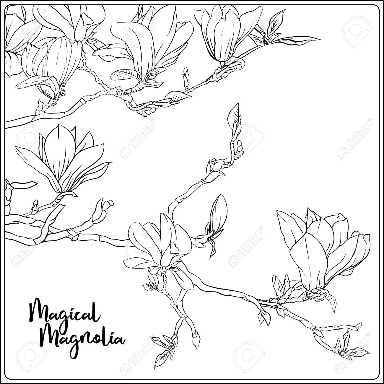 magnolia tree branch with flowers coloring page for the