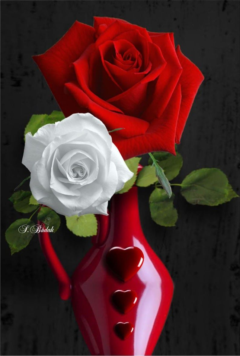 For You Rose Flower Beautiful Roses Beautiful Flowers