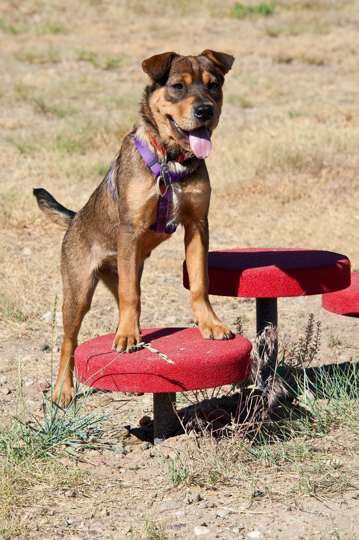 little dry creek dog park westminster co - Ideen Fr Kleine Hinterhfe Mit Hunden