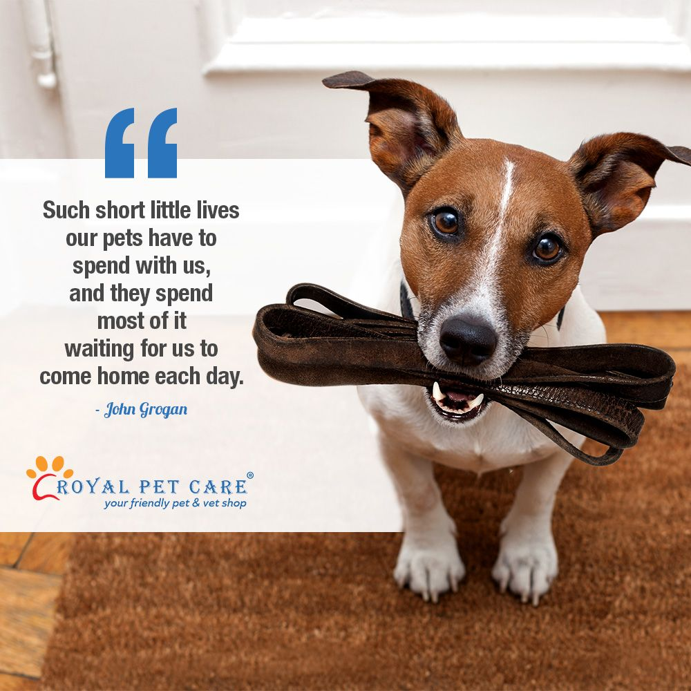 At Royalpetcare We Love All Your Pets Just Like You D Do Back Home Visit Http Bit Ly Royalpc01 To Know More About Pet Care Dog Boarding Near Me Pet Clinic