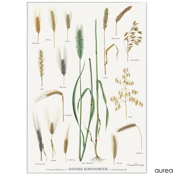 Plakat Med Spiselige Blomster Fra Koustrup Co Plakater Blad Tegning Mistbaenk