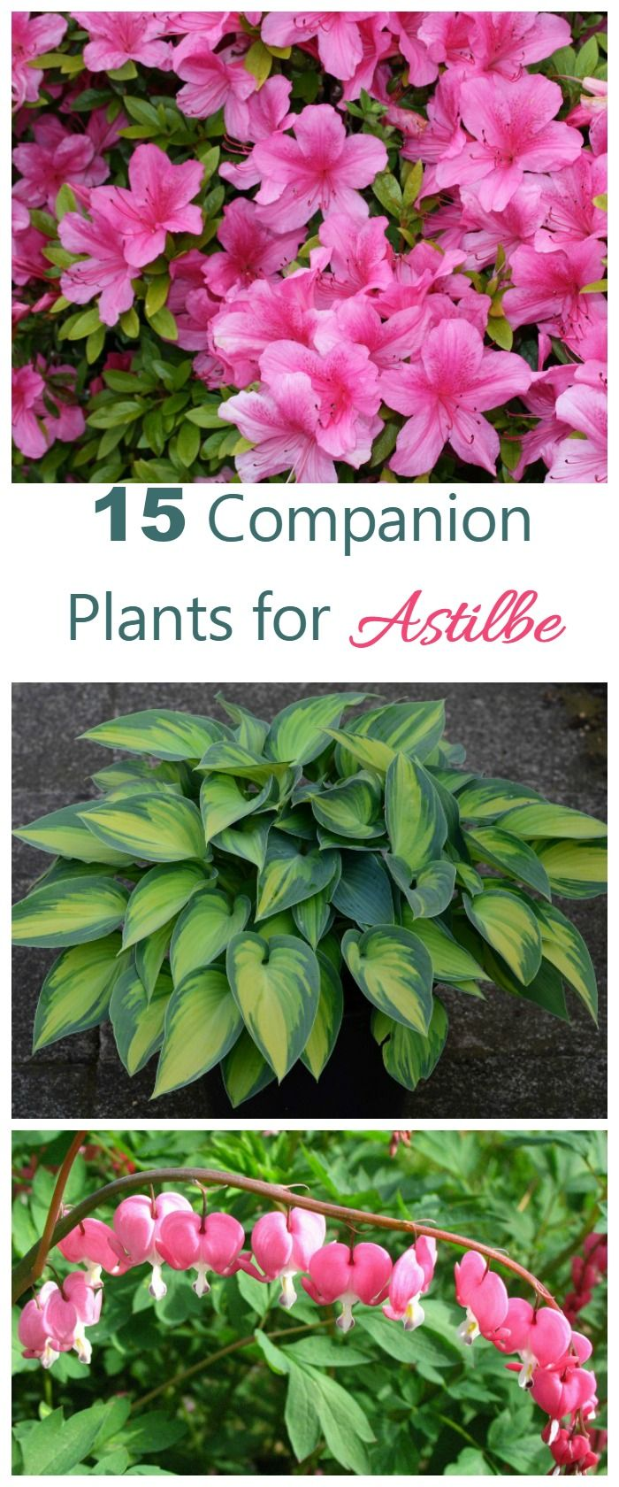 Astilbe companion plants what to grow with astilbe perennials these 15 perennials and annuals make great astilbe companion plants most love the same shade and moisture requirements and make a great looking garden bed izmirmasajfo