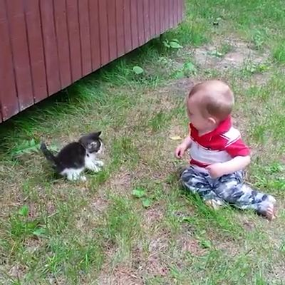 Adorable Babies & Cat's Love Compilation  #picturesofbabyanimals