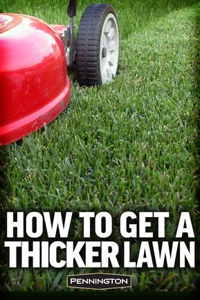 How to Get a Thicker Lawn and Keep It! is part of lawn Ideas Lush - Here are the simple secrets behind a thicker, lusher lawn that looks great to the eye and feels great under bare feet