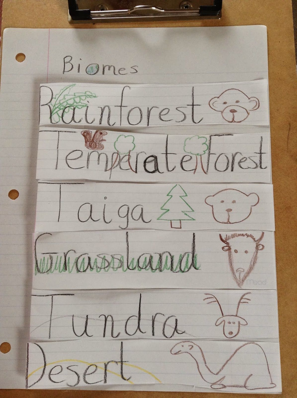 Biology Education Idea Echange: Biomes Foldable