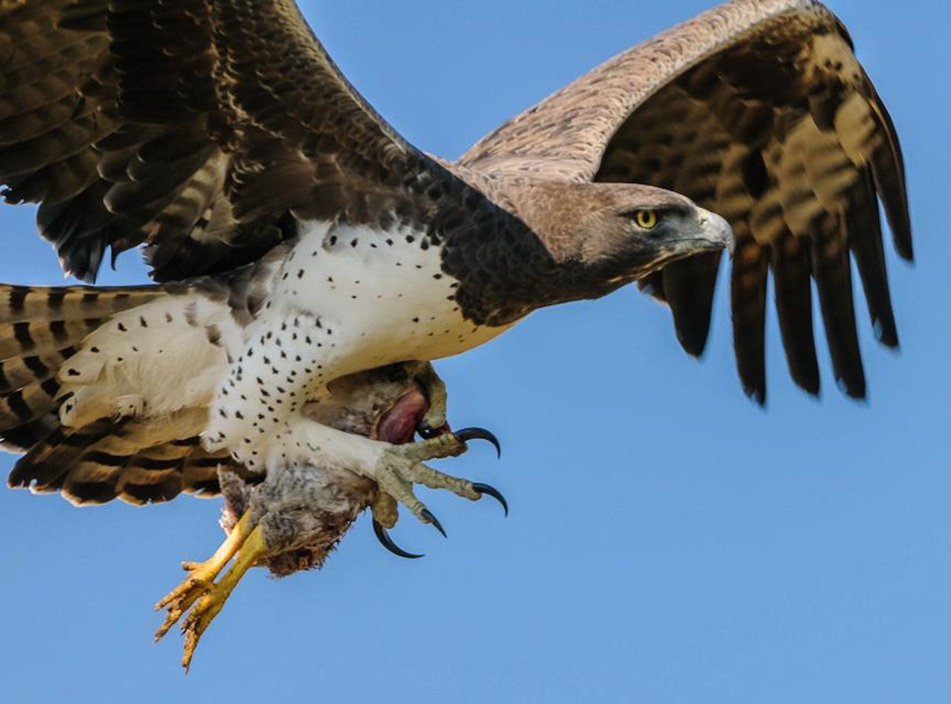 что картинки орла с добычей нем она