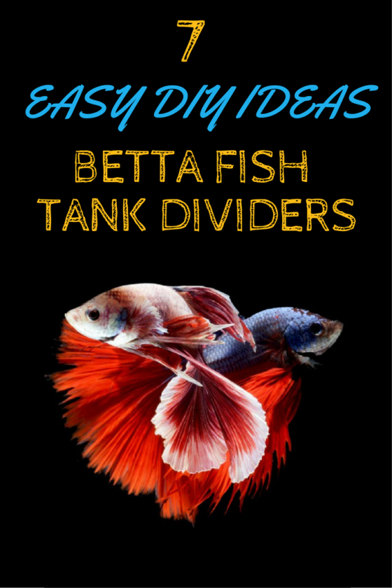 7 easy diy ideas for betta fish tanks with divider betta for Diy fish tank divider