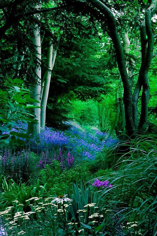 Resultado de imagen de bosque lazos verdes