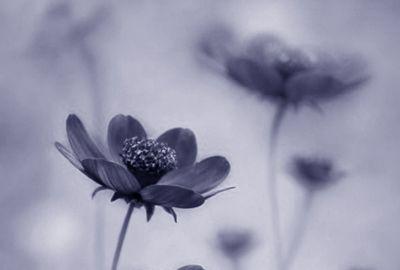 Wonderful Flowers Title Pic