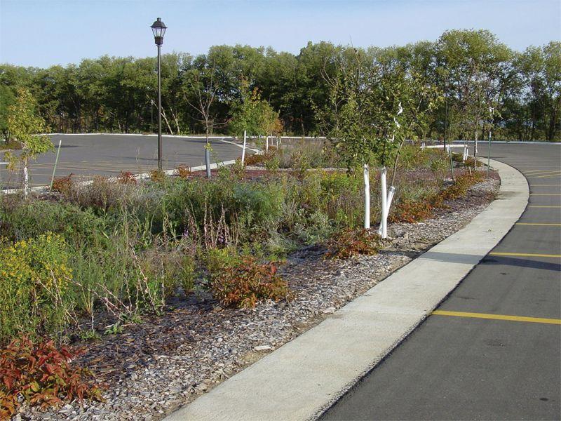 Bioretention Basin | Landscape drainage, Xeriscape
