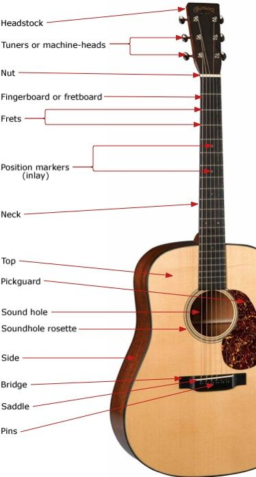 101 Anatomy Acoustic Basic Guitar Lessons Guitar For Beginners Guitar Chords Beginner