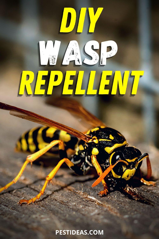 DIY Wasp Repellent in 2020 Wasp repellent, Wasp, Repellent