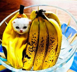 The cutest banana kitten costume! Follow to find some outrageous and unique banana costumes!  sc 1 st  Pinterest & The cutest banana kitten costume! Follow to find some outrageous and ...