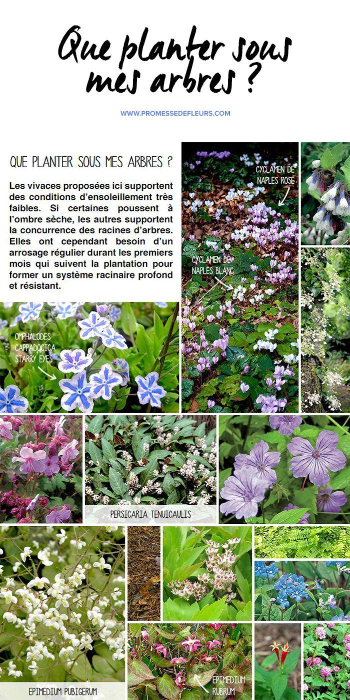 Fleur De Sous Bois Bleue que planter sous mes arbres ?   jardin d'ombre, jardin