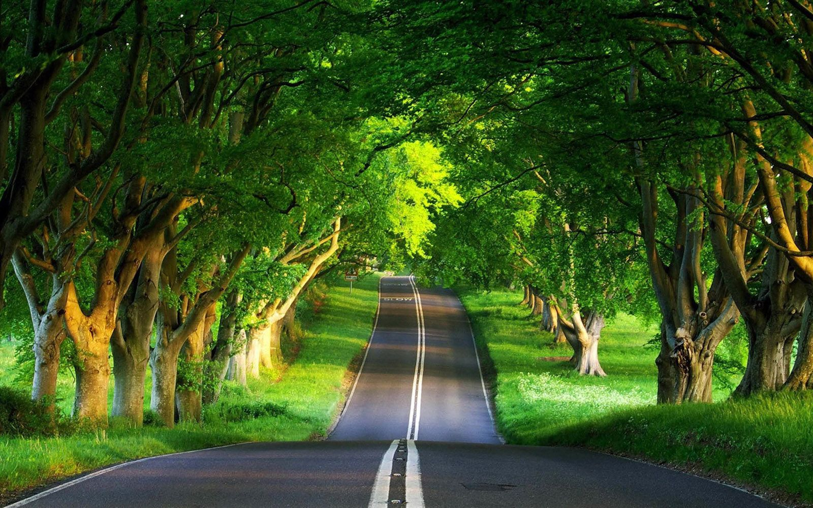 Free Download Cool Beautiful Nature Road Wallpaper Pageresource
