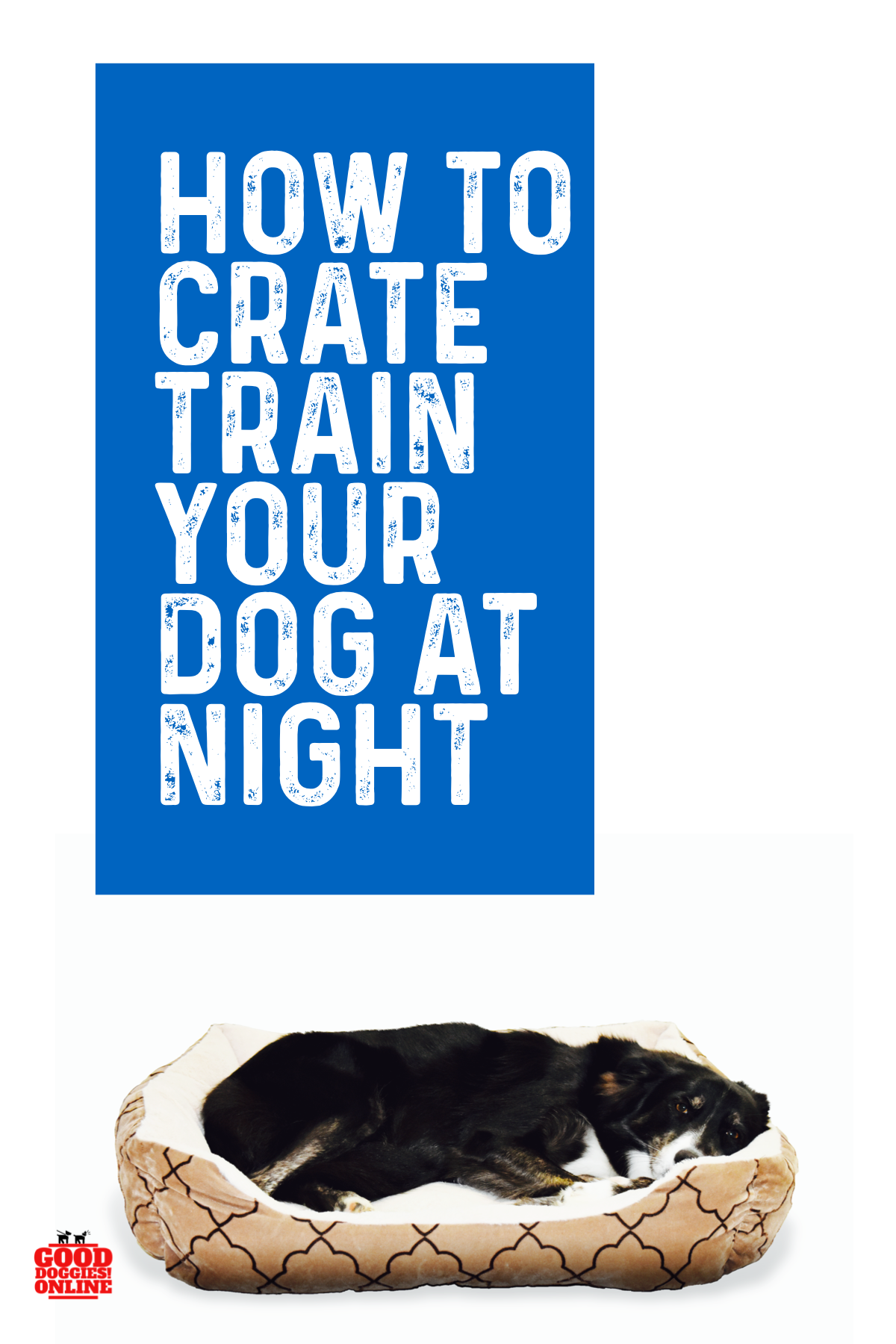 How to Crate Train a Dog at Night Dog whining, Crate