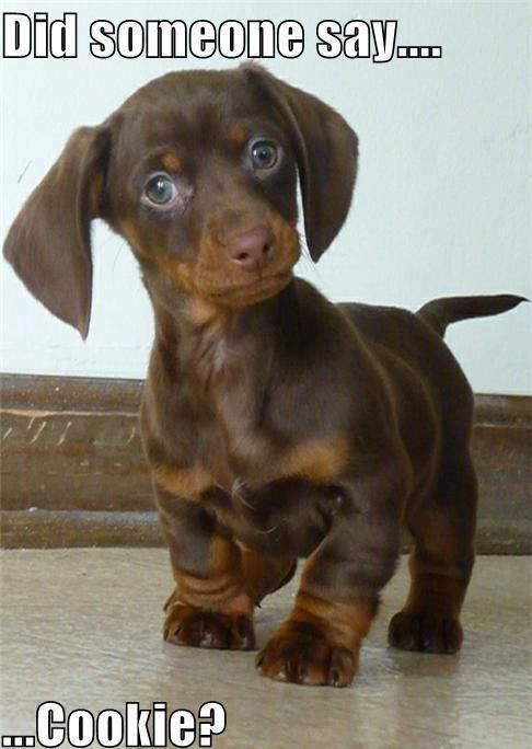 Most Inspiring Black Chubby Adorable Dog - 6473d1dd3858757f59349a71423edc9f  Photograph_109638  .jpg