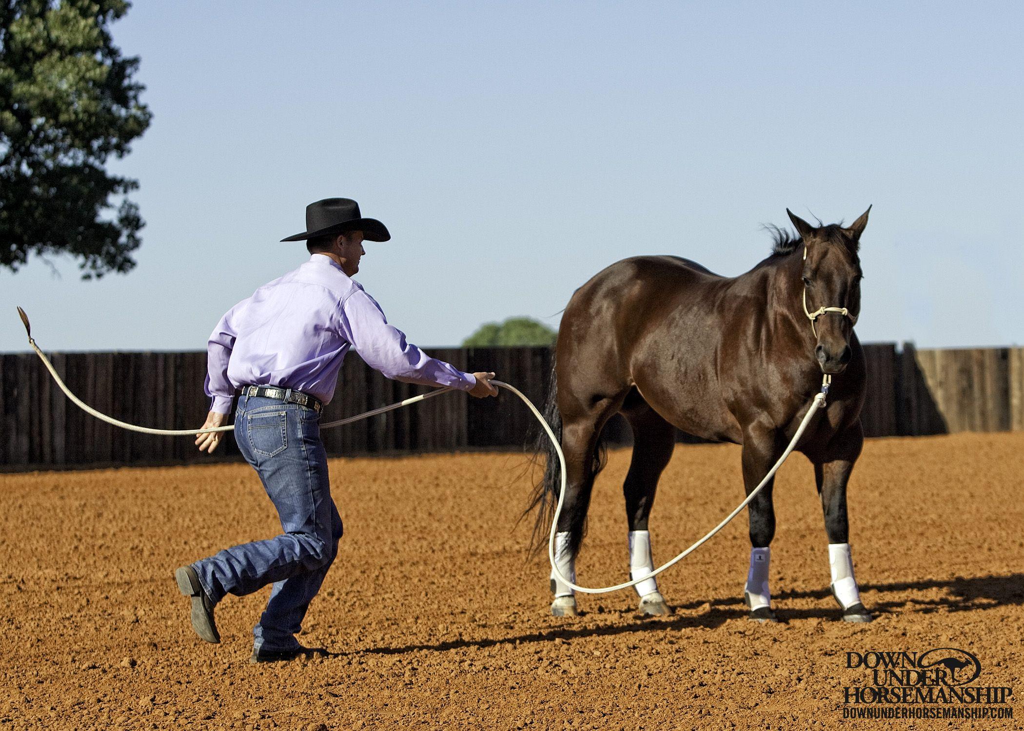 groundwork horses - HD2100×1500