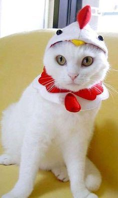 105 Halloween Cat Costumes That Will Make You Smile Check more at http://giveitlove.com/105-halloween-cat-costumes-that-will-make-you-smile/