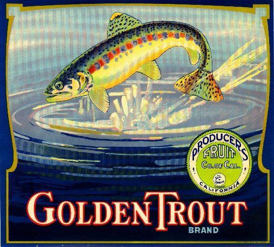 Lindsay Tulare County Golden Trout Orange Citrus Fruit Crate Label Art Print