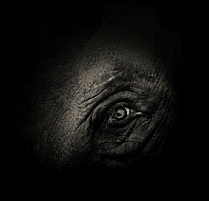 the negative effects of captivity on zoo animals Zara lived a long life of suffering in captivity,which is incomparable to a short life  of freedom zoos claim to protect endangered animals.