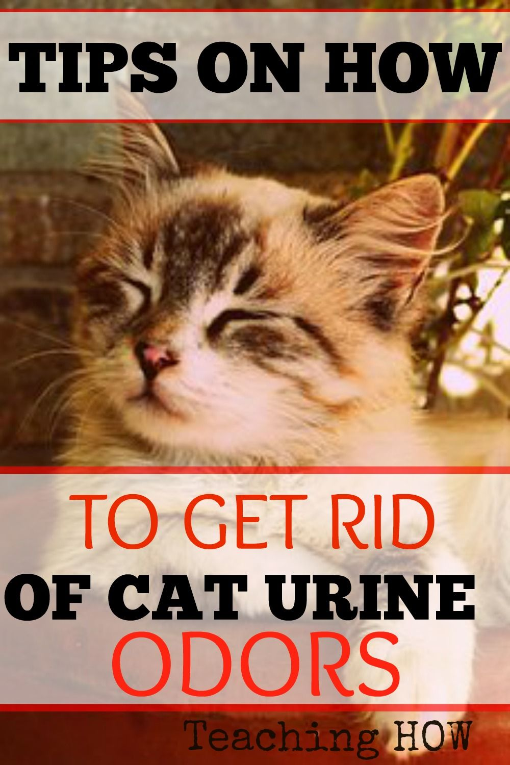 How to eliminate the smell of cat urine Tips and Tricks