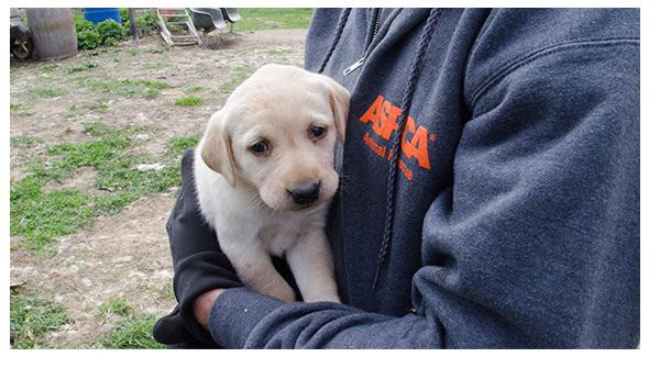 Pin By Stacey On Only Dogs Need Apply Puppy Mills Labrador Rescue Rescue Puppies