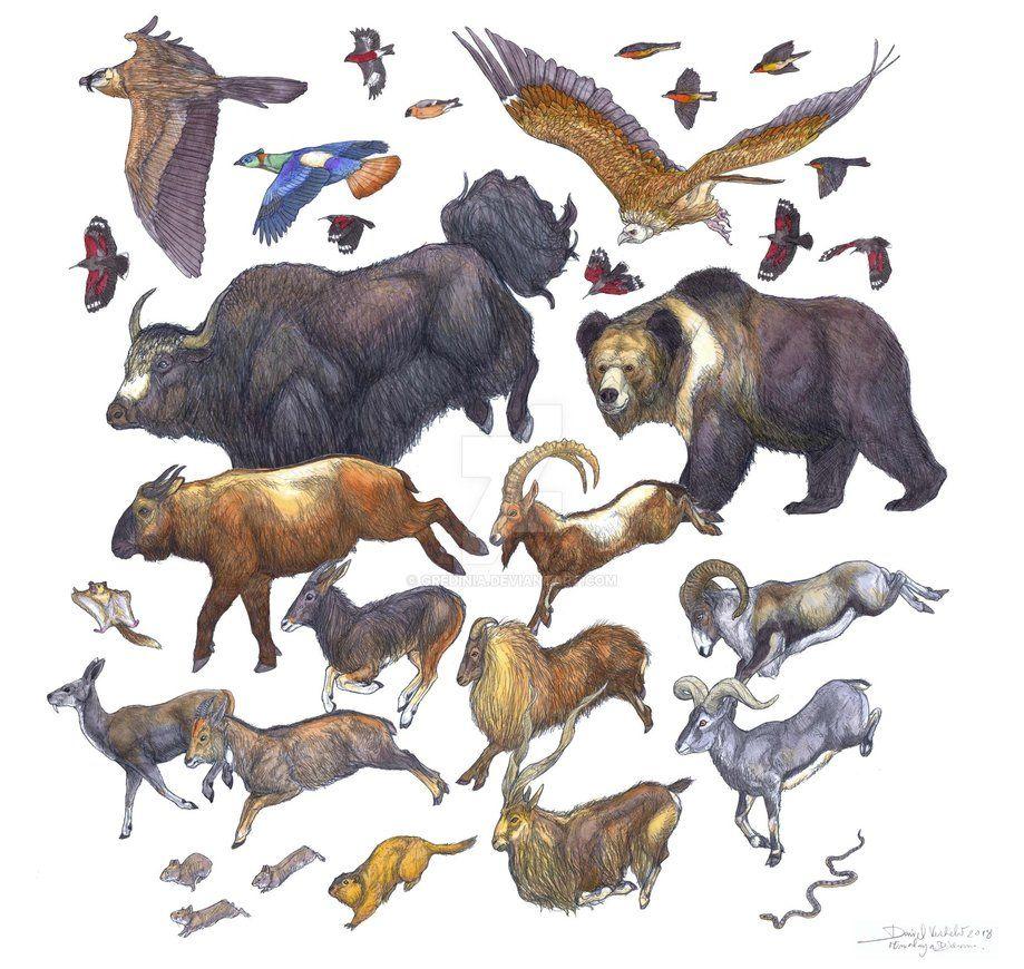 Himalayan Pika Ochotona Himalayana Himalayan Marmot Marmota Himalayana Tibetan Spring Snake Thermophis Baileyi Kas Animals Artwork Animal Art Nature Animals