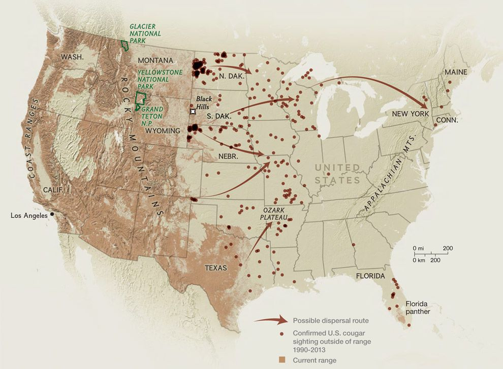 Mountain Lion Dispersal & Sightings Map -- The Indiana & Georgia ...