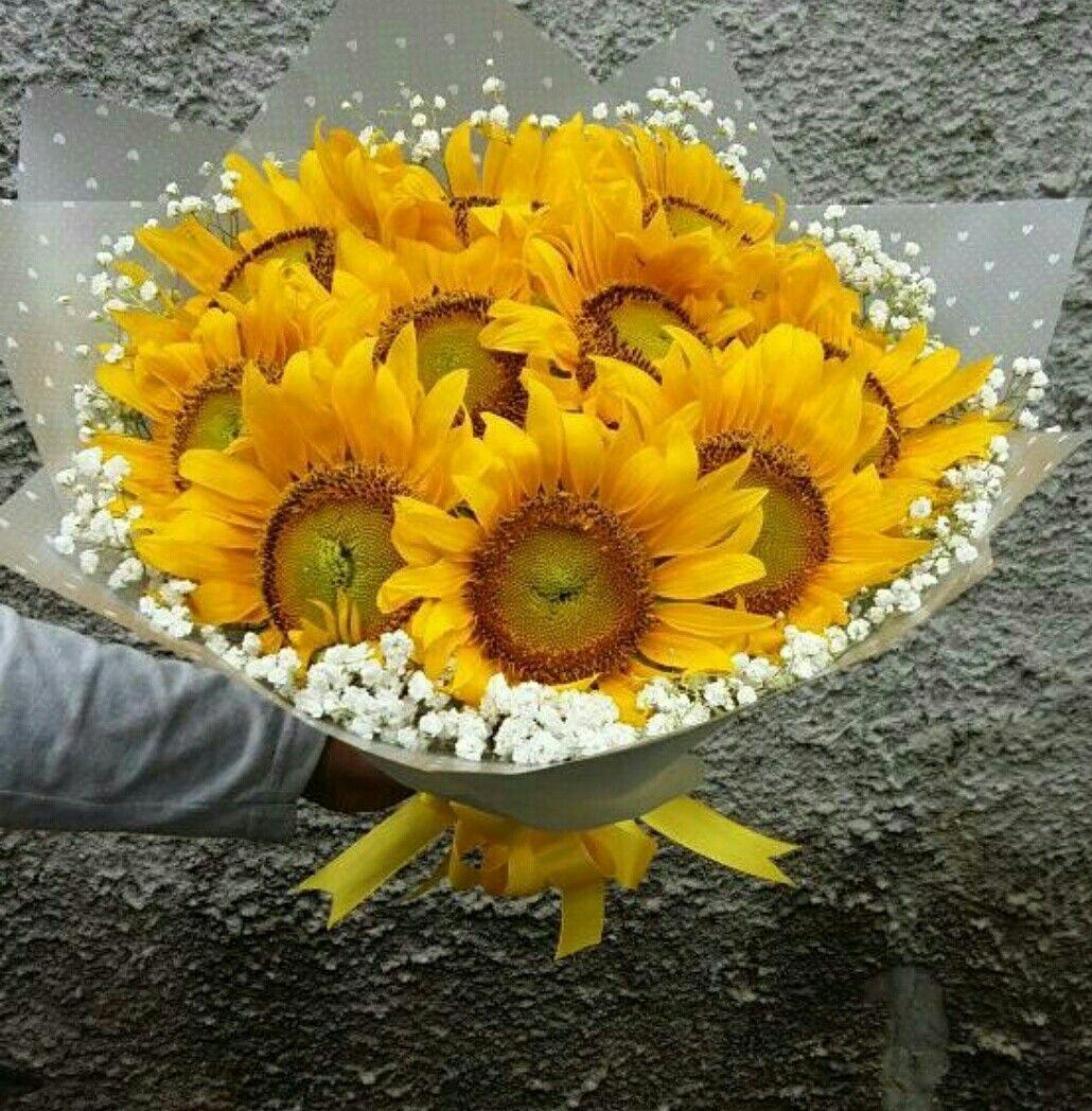 bunga buket matahari Bunga, Buket, Bunga matahari
