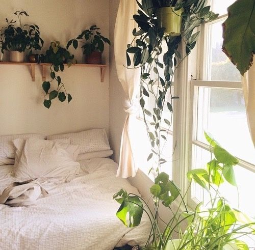 100+) Likes Tumblr ✫вє∂ тσ му яσσм✫ Pinterest Wohnideen - schlafzimmer pflanzen