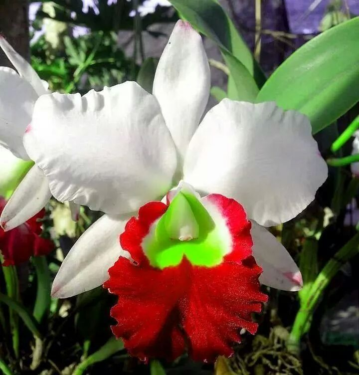 Beautiful Flowers Series Natural Unusual Flowers Beautiful Orchids Orchids