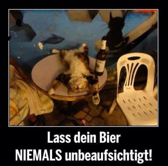 Lass Dein Bier Niemals Unbeaufsichtigt Lustige Bilder Von Tieren Katzen Memes Seltsame Katzen