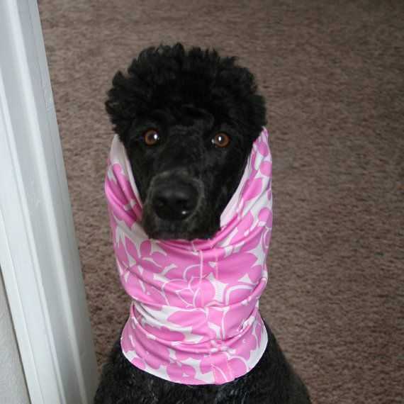 Darla Is A Model For Poodle Lounge Dog Snoods 10 00 Dog