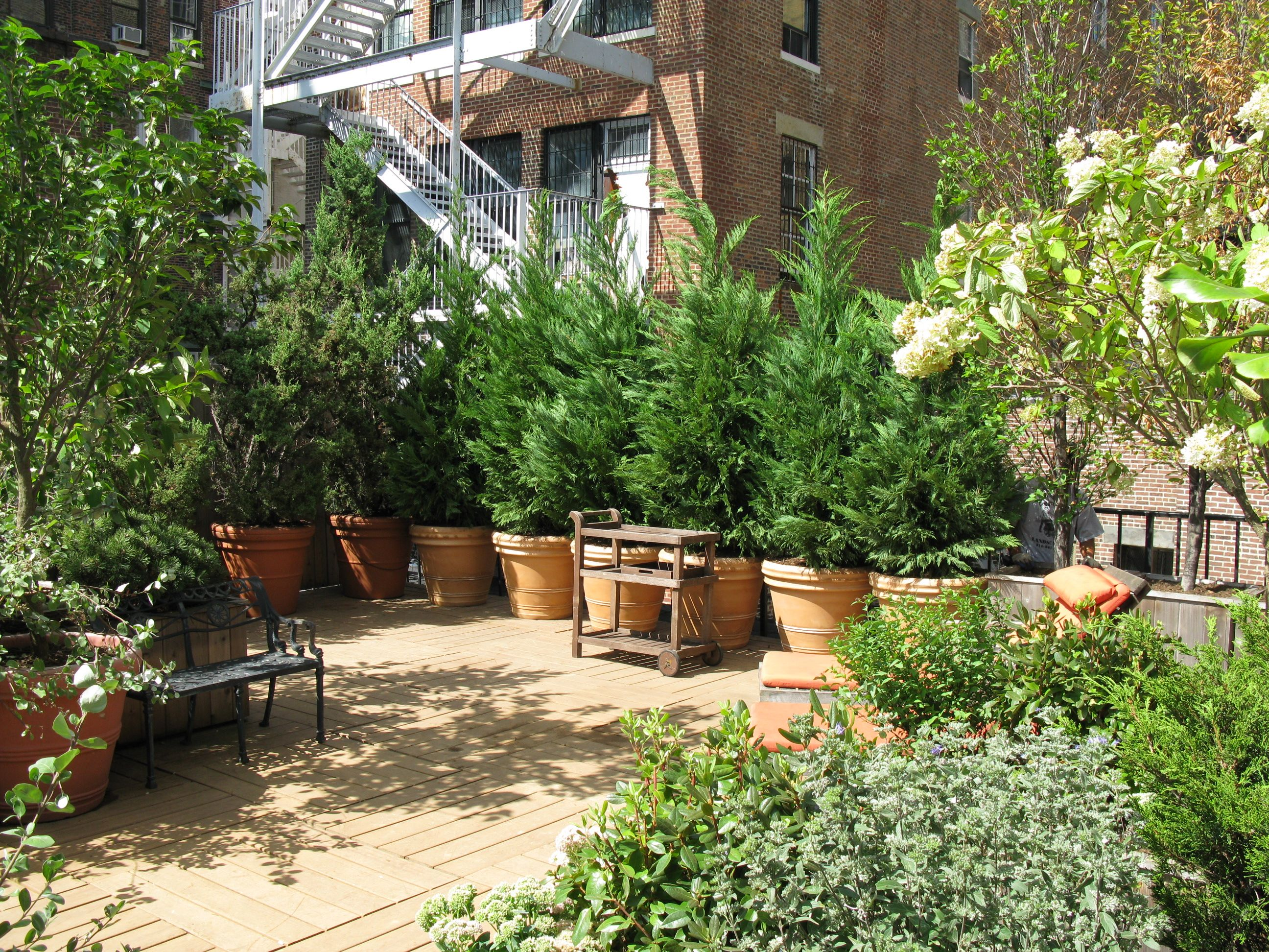 Potted Shrubs help to create a lush green space in the city. #NYC ...