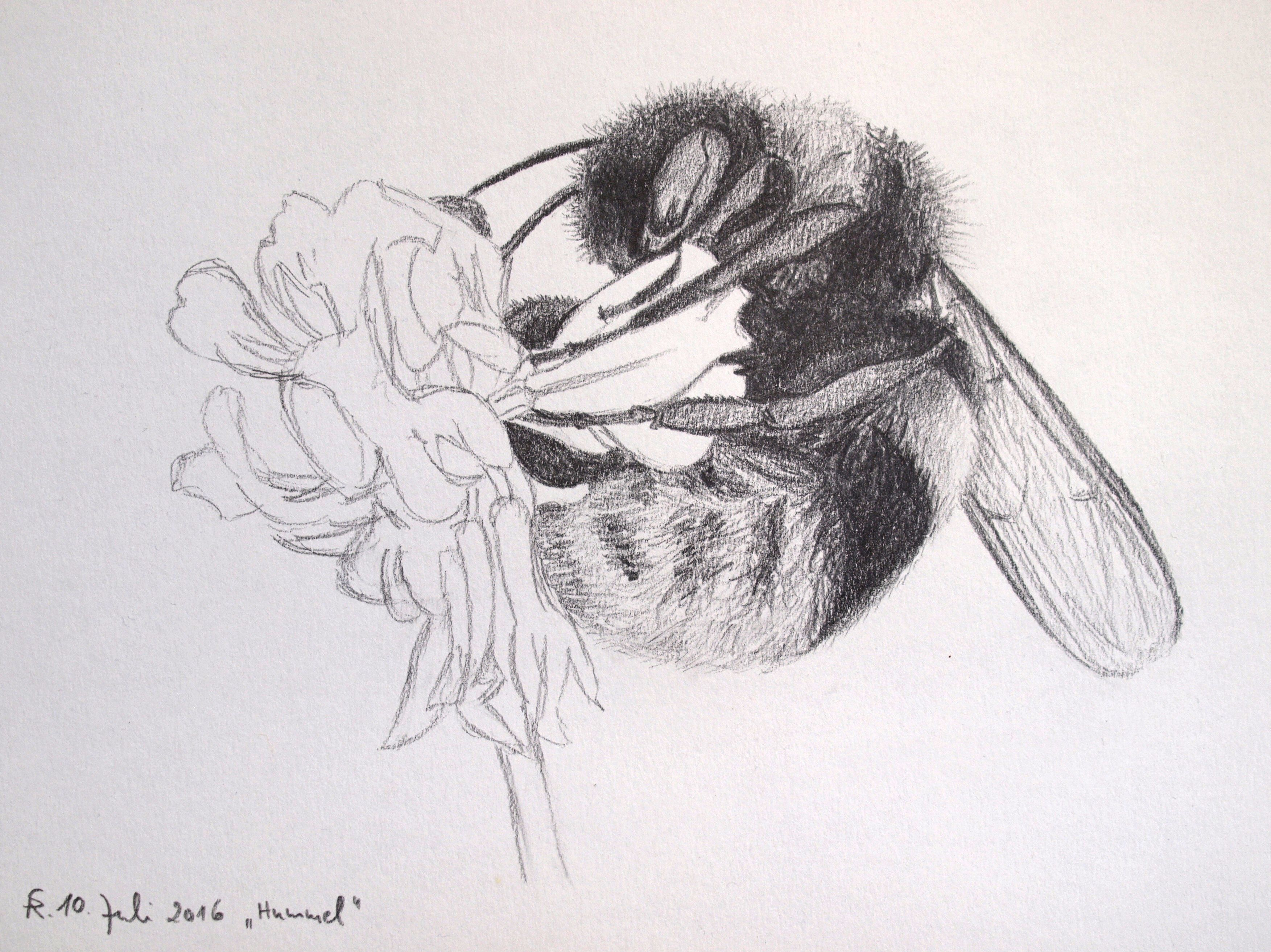 Hummel | Zeichnungen | Pinterest | Insekten, Zeichnungen und Zeichnen
