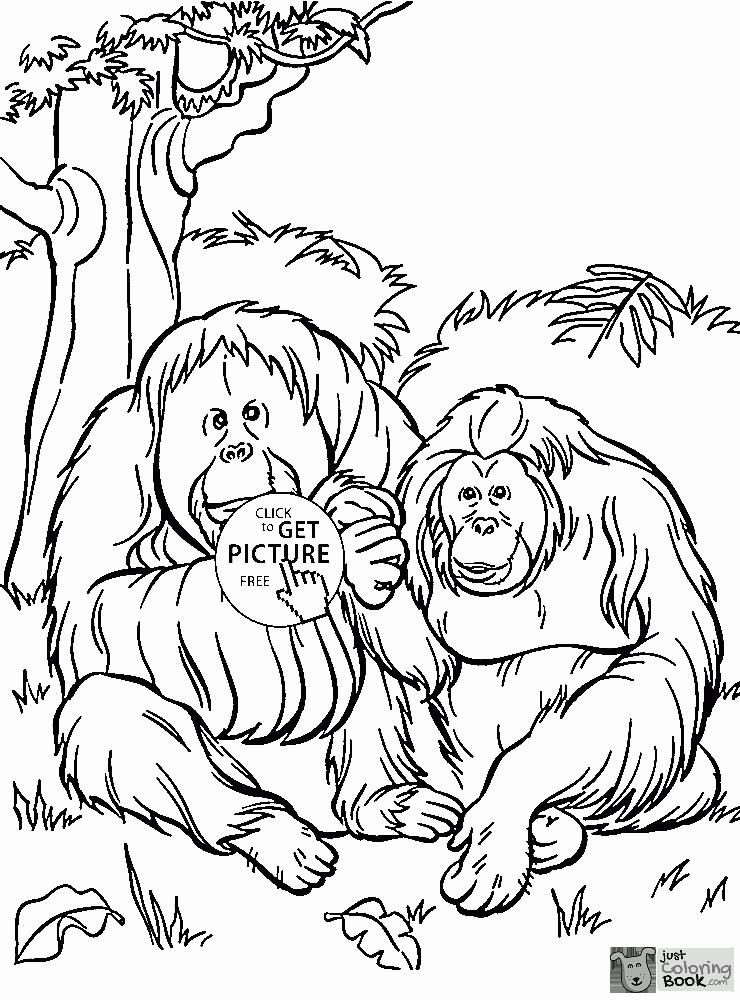 Orangutans Coloring Page For Kids Animal Coloring Pages