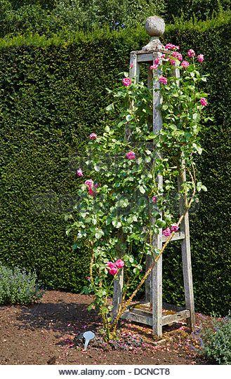 Ornate Rose Trellis In The Form Of A Bossed Wooden Obelisk 640 x 480