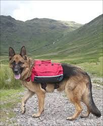 A dog back pack it should help to expend energy from your dog by carrying the back pack (as long as it is not too Heavy)