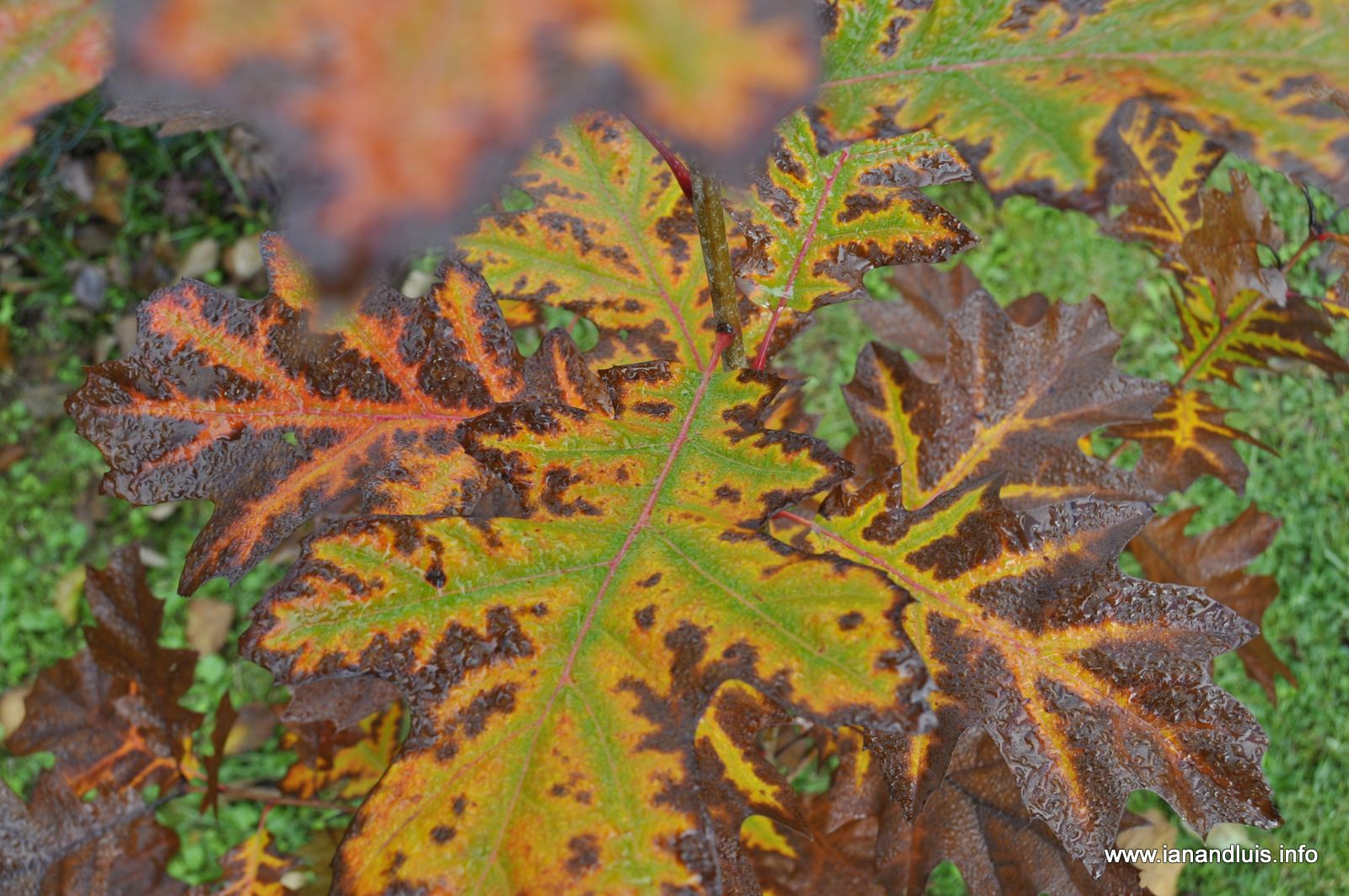 Tales from Toriello: Autumnal jobs around the garden - the working ...