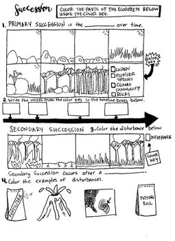 Primary and secondary succession  made this coloring sheet to highlight key terms such as pioneer species lichen climax community also rh pinterest